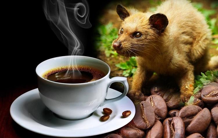 koliko-kosta-najskuplja-kafa-na-svetu-kopi-luwak